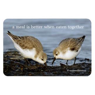 A Pair of Sanderlings Shares Magnet
