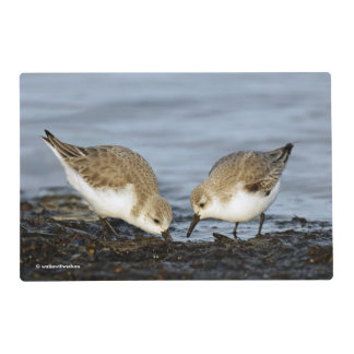 A Pair of Sanderlings Shares Placemat