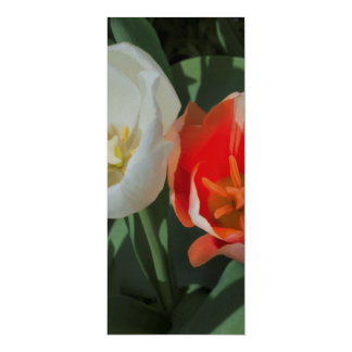 A Pair of Tulips Card