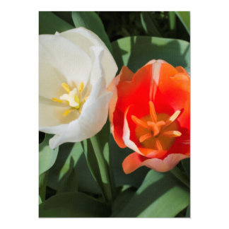 A Pair of Tulips Custom Announcements