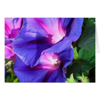 A Pair of Vibrant Morning Glories In Full Bloom Card