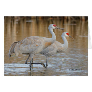 A Pair of Wading Greater Sandhill Cranes Card