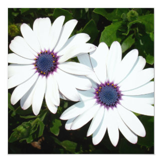 A Pair of White African Daisies 5.25x5.25 Square Paper Invitation Card