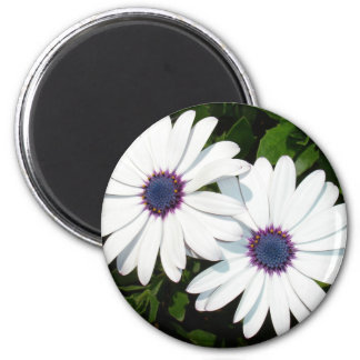 A Pair of White African Daisies Refrigerator Magnet