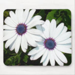 A Pair of White African Daisies Mousepads