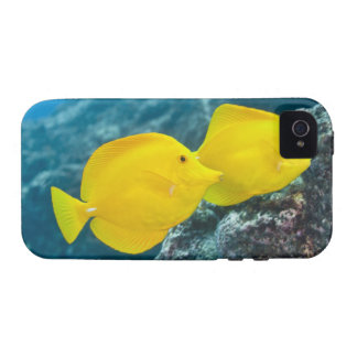 A Pair of Yellow Tangs iPhone 4/4S Covers