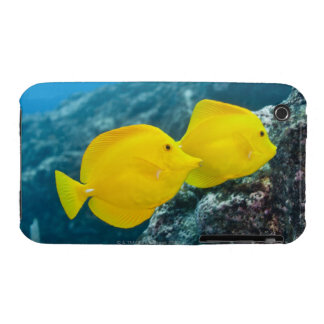 A Pair of Yellow Tangs iPhone 3 Case-Mate Case
