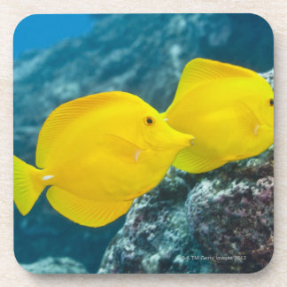 A Pair of Yellow Tangs Drink Coasters