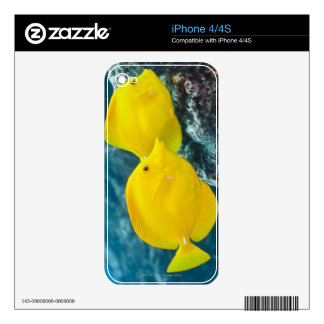 A Pair of Yellow Tangs Skins For The iPhone 4S