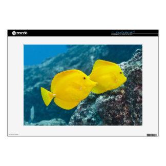 "A Pair of Yellow Tangs Decal For 15"" Laptop"