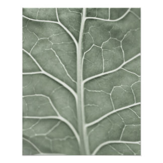 A pale leaf, partially out of focus poster