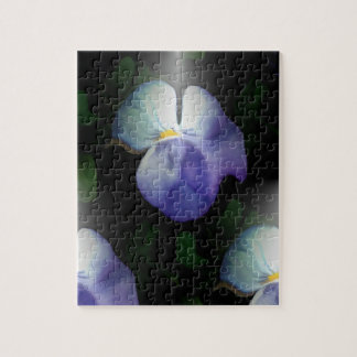 A Pansy Puzzle