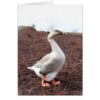 A park goose card