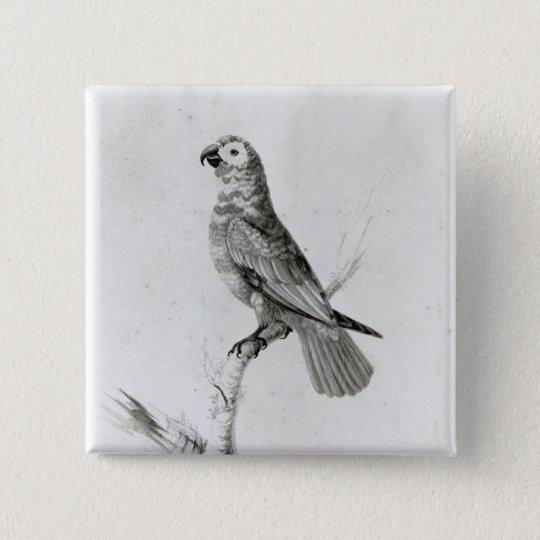 A Parrot, 1786 Pinback Button