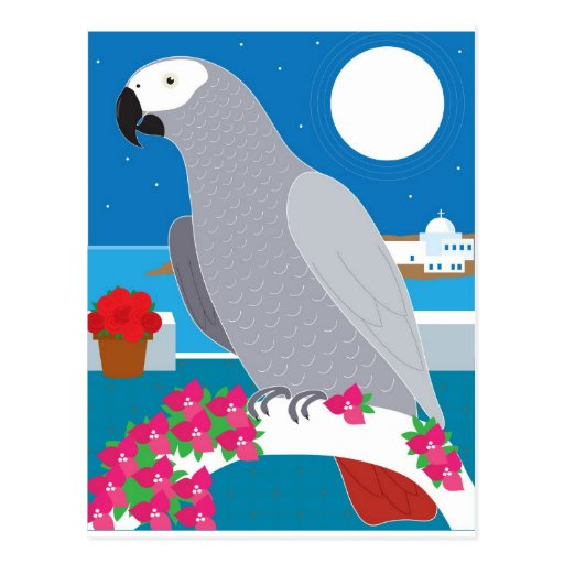 A Parrot in Paradise Post Card
