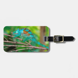 A Parson's Chameleon moving along a branch 2 Bag Tag
