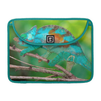 A Parson's Chameleon moving along a branch 2 MacBook Pro Sleeve