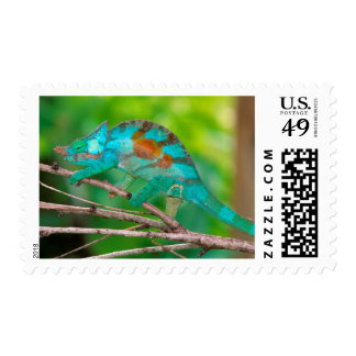 A Parson's Chameleon moving along a branch 2 Postage