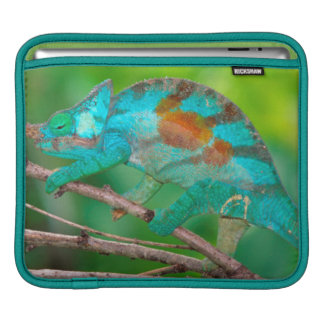 A Parson's Chameleon moving along a branch 2 Sleeve For iPads