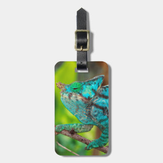 A Parson's Chameleon moving along a branch Bag Tag