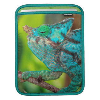 A Parson's Chameleon moving along a branch iPad Sleeves