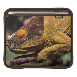 A Parson's Chameleon perched on a branch iPad Sleeve