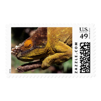 A Parson's Chameleon perched on a branch Postage