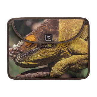 A Parson's Chameleon perched on a branch Sleeve For MacBook Pro