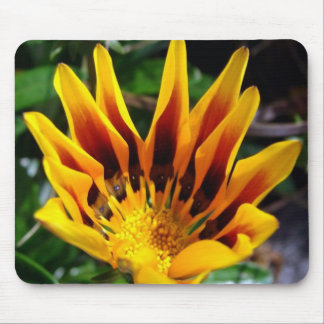 A Partially Opened Yellow and Burgundy Petal Gazan Mouse Pad