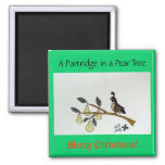 A Partridge in a Pear Tree. Magnet
