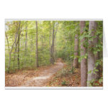 A path in the woods greeting cards
