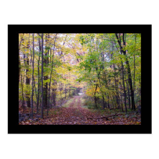 A Path in the Woods Postcard