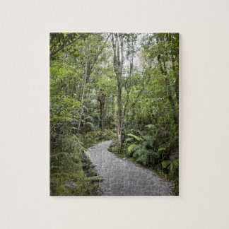 A path through a rain forest at the base of jigsaw puzzle