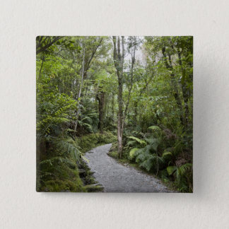 A path through a rain forest at the base of pinback button