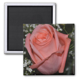 A Peach-Coral Colored Rose Fridge Magnets
