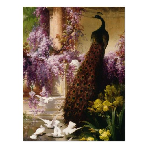 A Peacock and Doves in a Garden Print Post Card