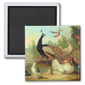 A Peacock, Doves, Chickens and a Jay in a Park 2 Inch Square Magnet