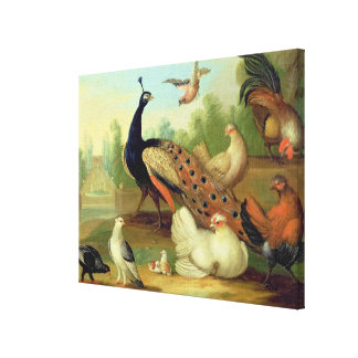 A Peacock, Doves, Chickens and a Jay in a Park Canvas Print