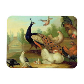A Peacock, Doves, Chickens and a Jay in a Park Rectangular Photo Magnet