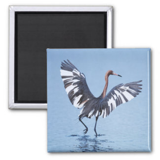 A pecular hybrid of the dark and white morphs of 2 inch square magnet