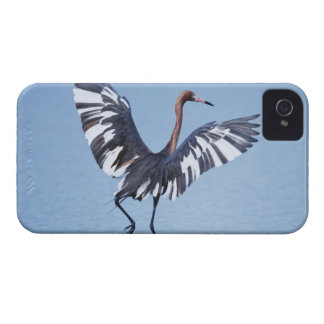 A pecular hybrid of the dark and white morphs of iPhone 4 case