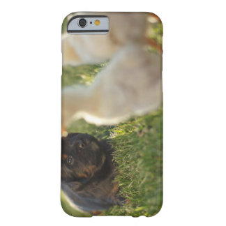 A Pekinese puppy on the grass. Barely There iPhone 6 Case