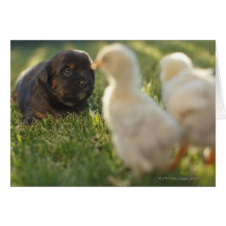 A Pekinese puppy on the grass. Card