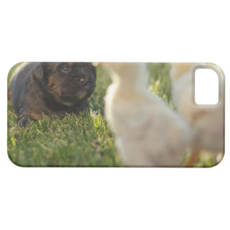 A Pekinese puppy on the grass. iPhone SE/5/5s Case
