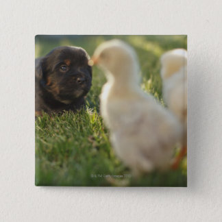 A Pekinese puppy on the grass. Pinback Button
