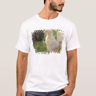 A Pekinese puppy on the grass. T-Shirt