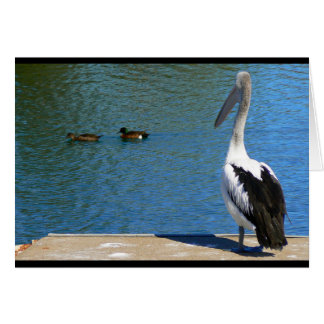 A pelican watching ducks swim by card