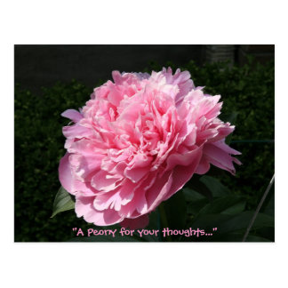A Peony for your thoughts... Postcard