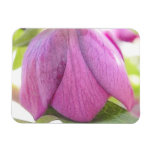 A Perfect Hellebore Bud Magnets