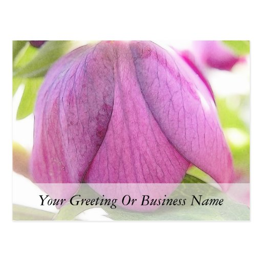 A Perfect Hellebore Bud Post Cards
